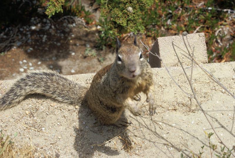 Monterey the Squirrel wisperer 2.jpg