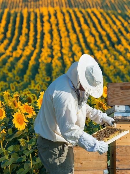 Keeper_Hives_SunflowersVert.jpg