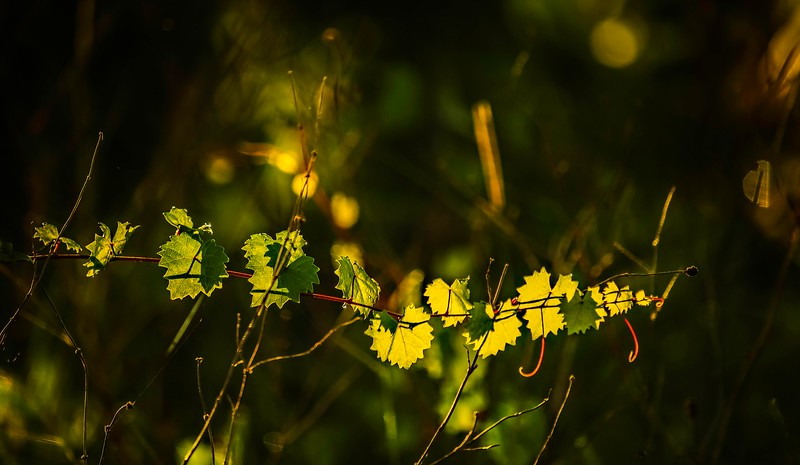 The Magic of Light-383.jpg