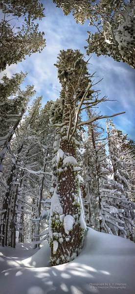 Boreal Snowshoe Hike
