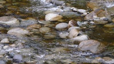 Seymour River salmon migration
