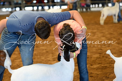 Goat Ringshots - Class 7 through Showmanship