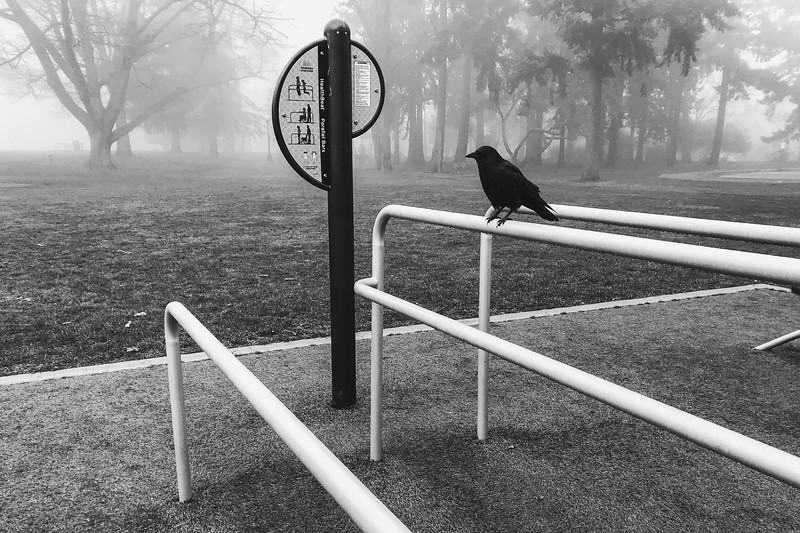 A crow sits on an exercise bar in Hiawatha park during a foggy morning. This crow let me get pretty close.