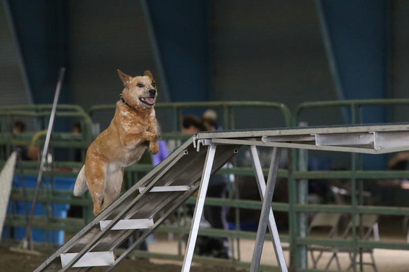 3-10-2019 Bloodhound-9695.jpg