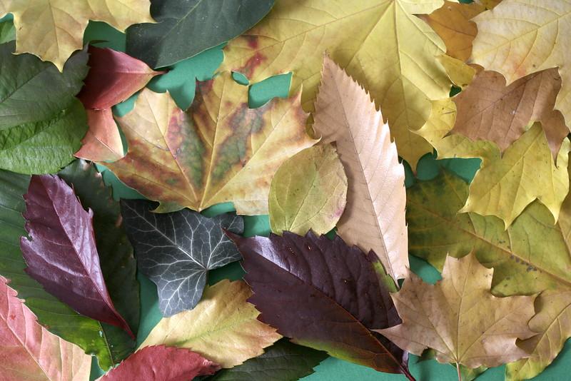 podzim listy.jpg