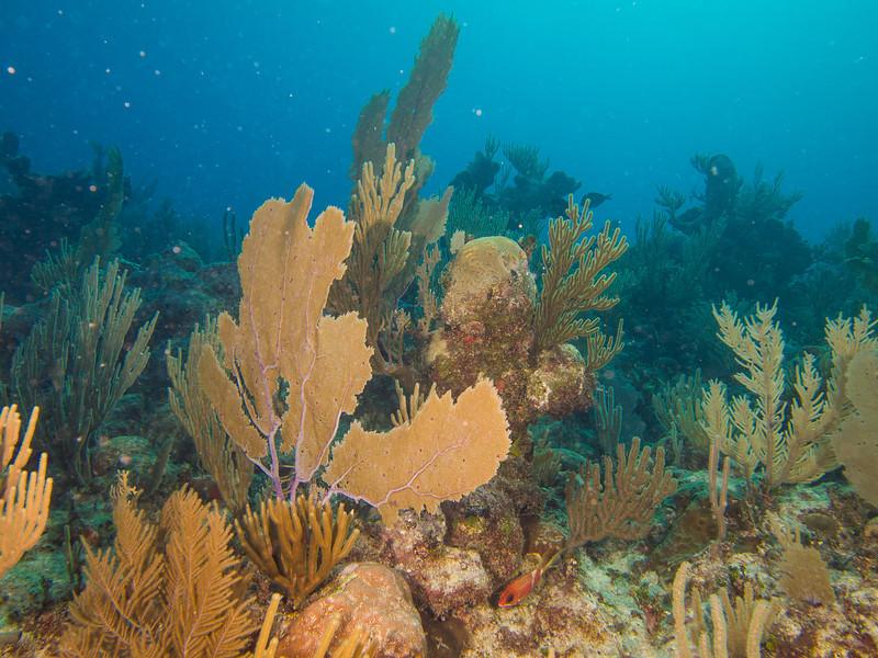 Tulum Trip - Diving 20130405-17-44 _405262804.jpg