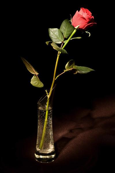 Rose 2 - 2 leaves_Blended-1.jpg