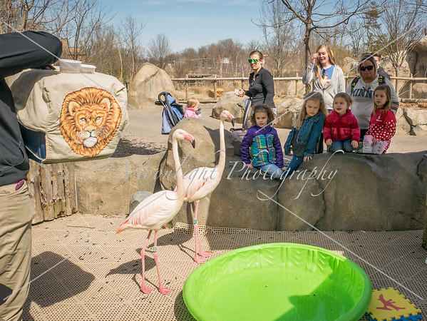 Zoo March 2018 with Grands