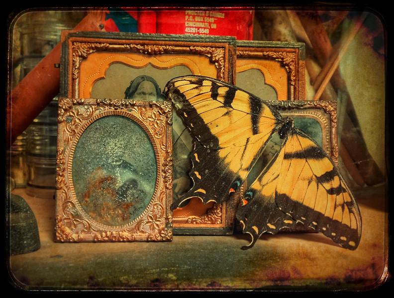Still life (photo on gold, 8.5x11)