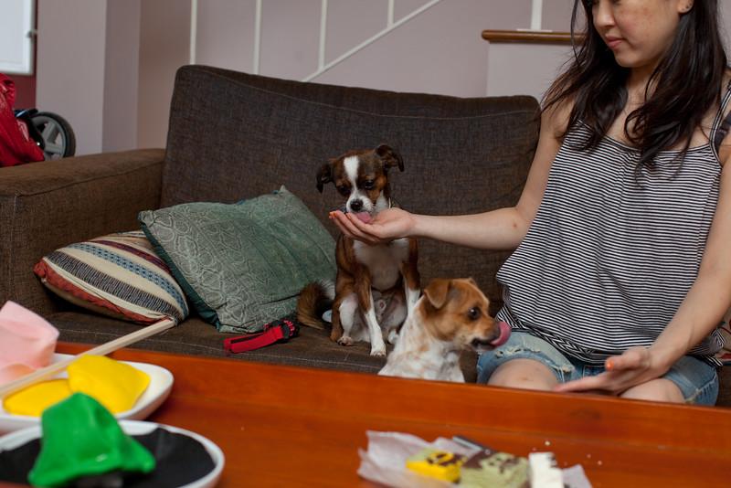Dog-sushi-halloween2-26.jpg