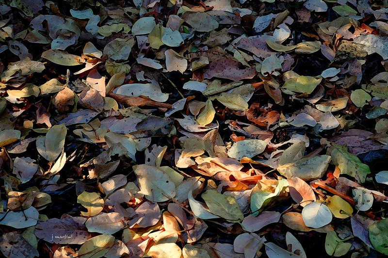 leaf bed 9-15-2011.jpg
