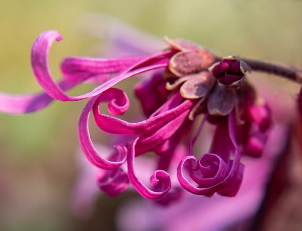 Garden Flowers of Spring