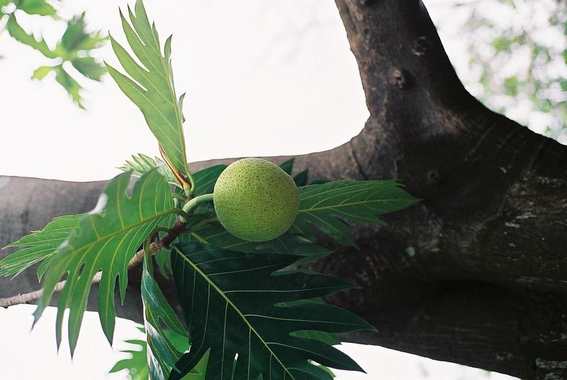 fruit_1907561444_o.jpg