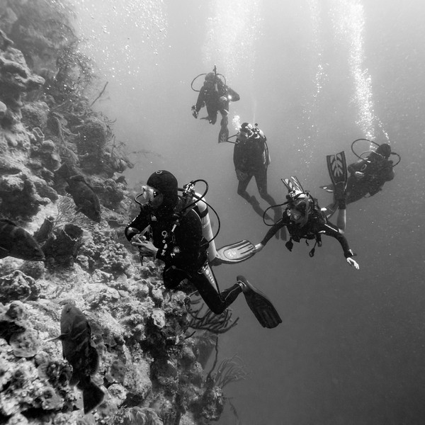 Scuba divers underwater around coral reefs, Tarpon Cayes, Belize Barrier Reef, Lighthouse Reef, Belize