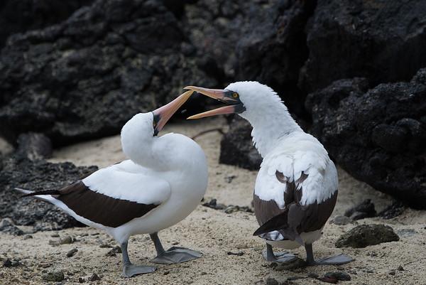 Galapagos mix