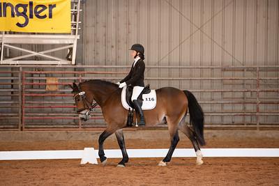 Horse 116