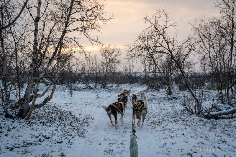 Dog Mushing-9710.jpg