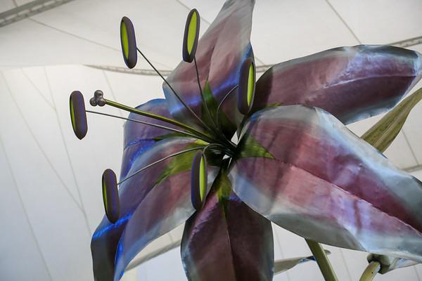 Denver Lily