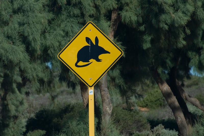 Kangaroo Rat Crossing Sign - Shark Bay, Western Australia