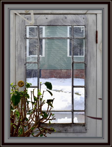 2018-03-10 Caper Elizabeth Park Rose Garden V(38) Window