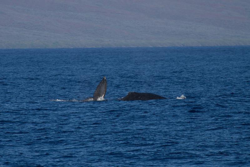 Hawaii2012-978.jpg