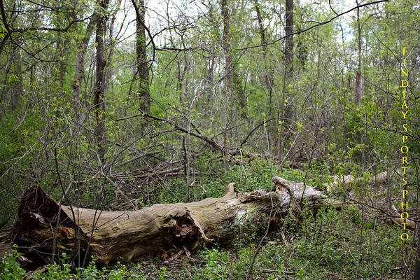 Oakwoods Natures Preserve