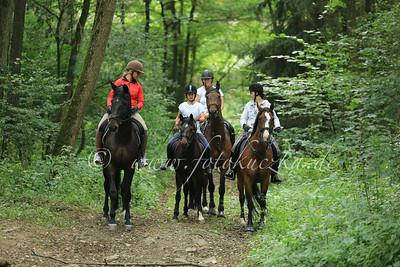 Mit den Pferden in den Fluss