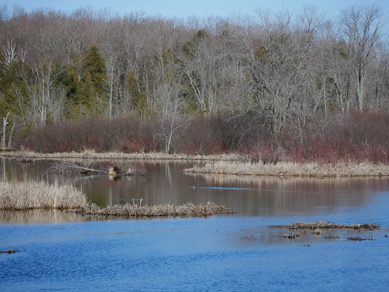 Pigeon River and wetland area