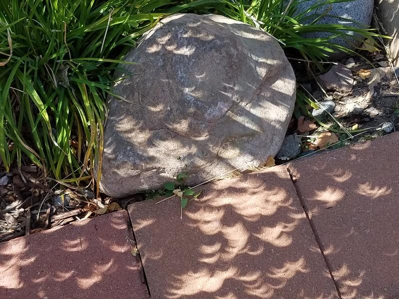 Eclipse leaves shadow.jpg