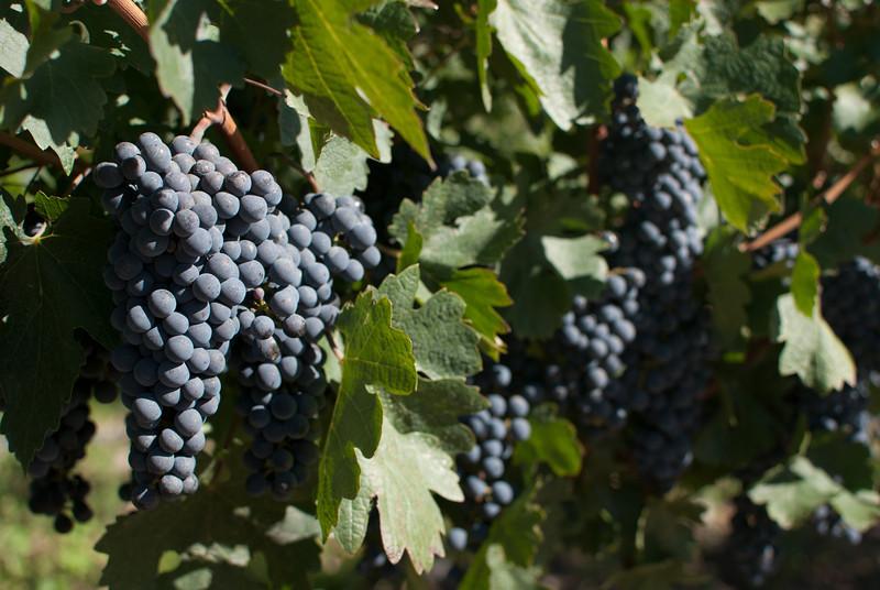 Cafayate 201203 Amalaya Wine (23).jpg