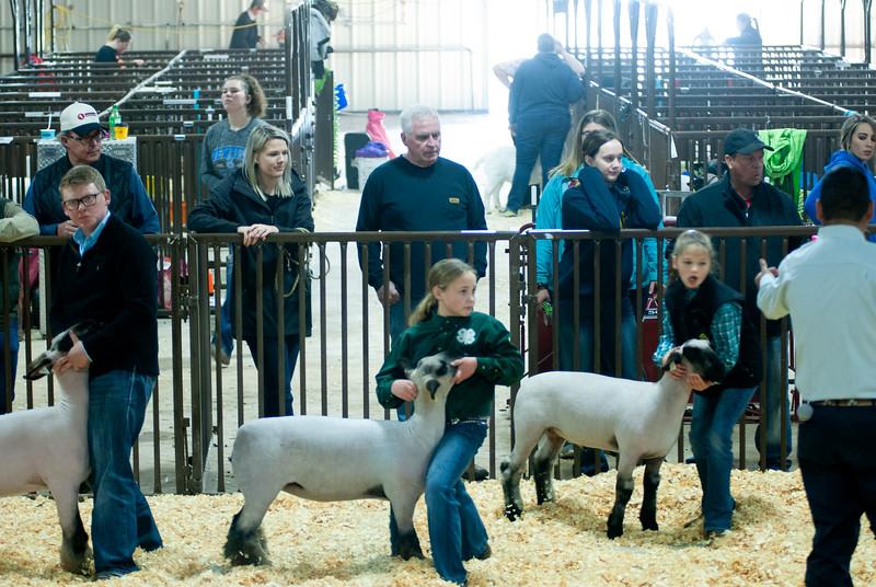 kay_county_showdown_sheep_20191207-78.jpg