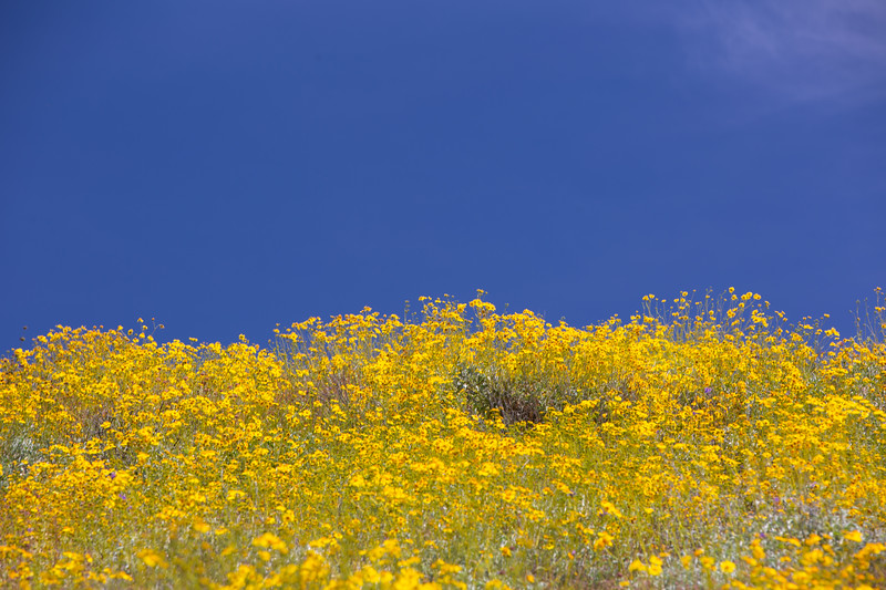 Spring Flowers B-202.jpg