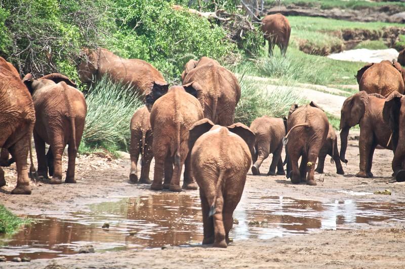 Kenya.Card3.02.2014 299
