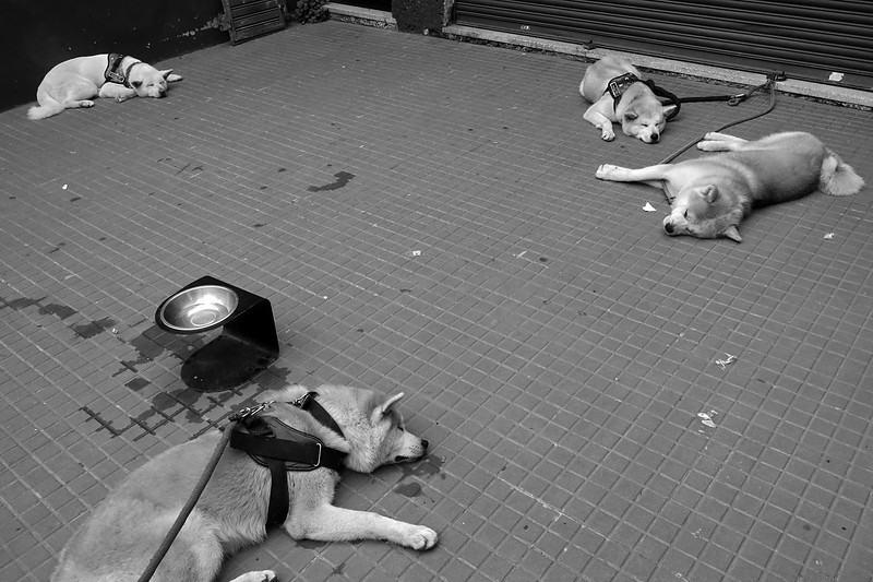 Descanso canino - Buenos Aires - Argentina