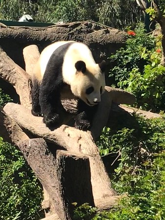 San Diego Zoo April 2019