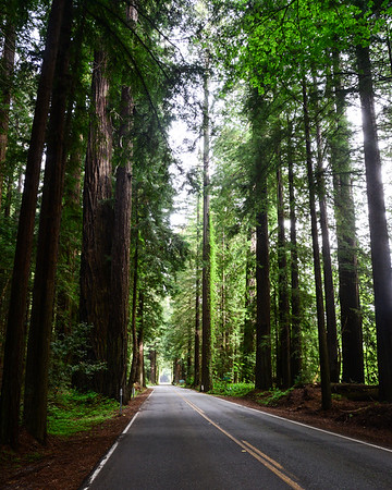 Humboldt Redwoods State Park and Ave of Giants