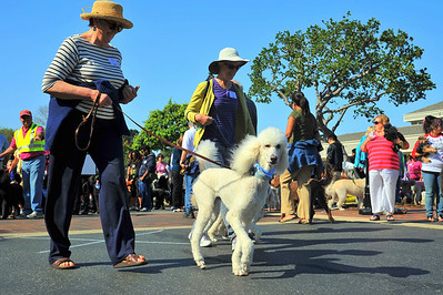 Poodle Day 2012-Parade 2
