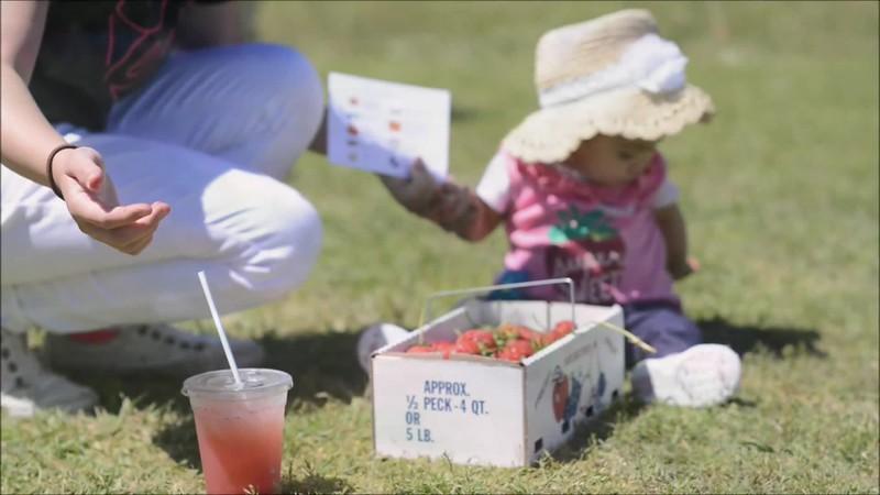 Strawberry Picking.mp4