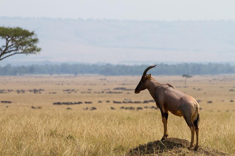 2013-Kenya2013-0720-9609.jpg