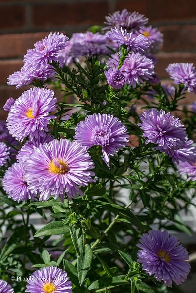 Don Egan's Flowers -119.jpg