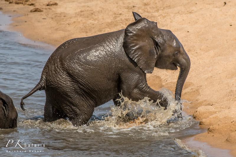 BW Bekker PKSafaris Elephants (4 of 4).jpg