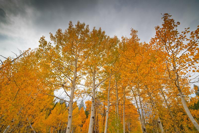 tahoe_282.jpg
