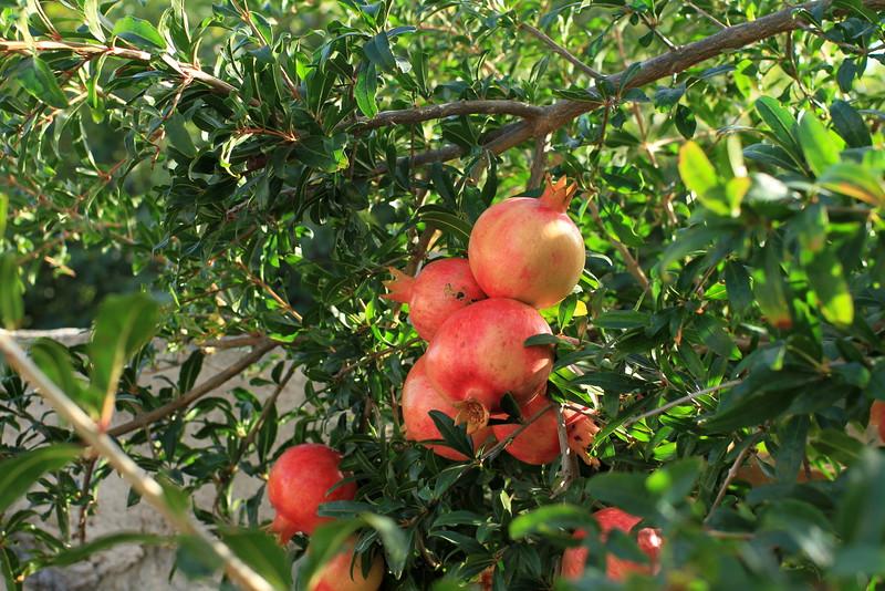Pomegranates!!!