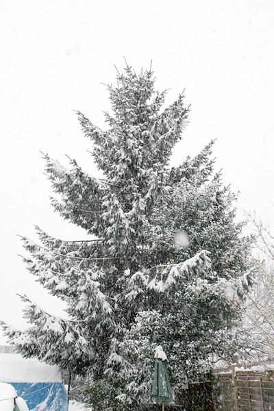 Snow 2010 096.jpg