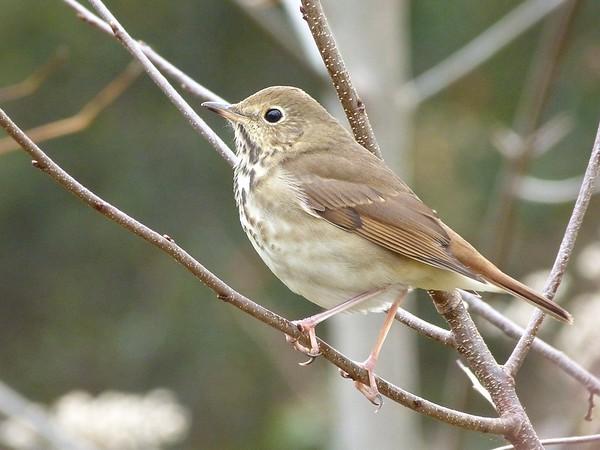 Birds October December 2015