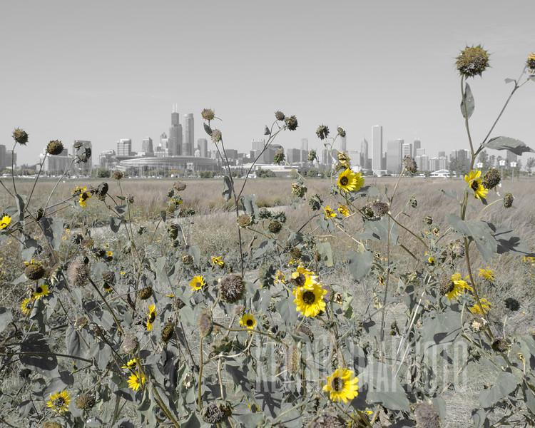 FloweredSkyline-8x10.jpg