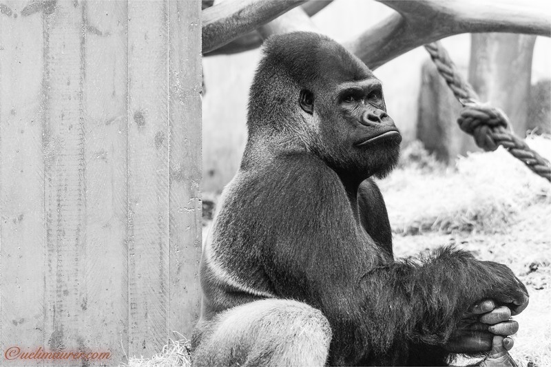 2017-11-16 Zoo Basel - 0U5A8710.jpg