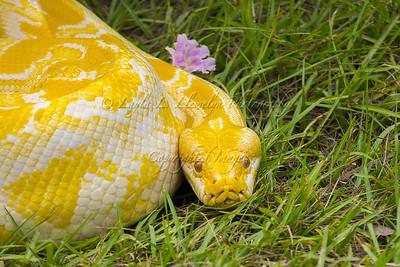 Reptiles Among Us