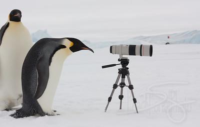 Curiosity. Snow Hill Island, Antarctica