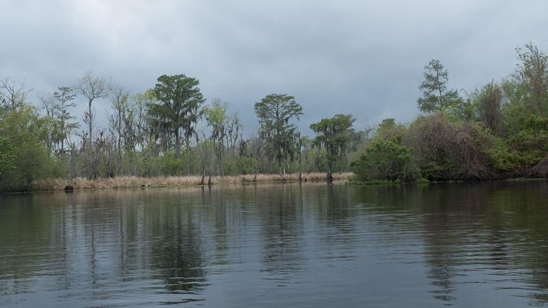 ManchacSwamp-6893.jpg